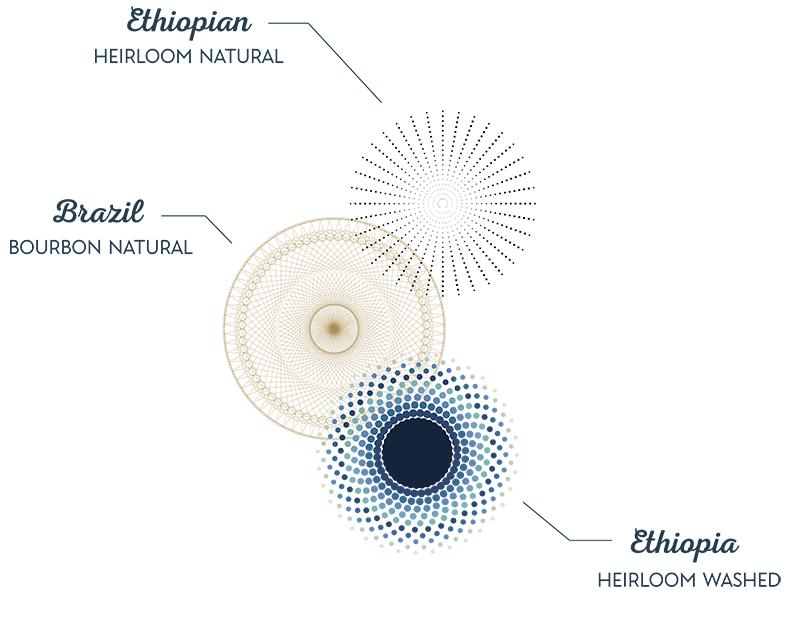 seasonal_blend_coffee_infographic_mmc_roasters